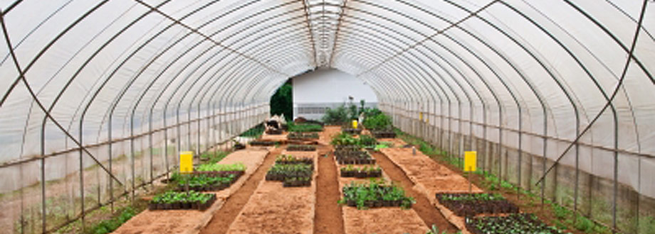 agricultural polytunnel